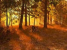 Cool Autumn Forest