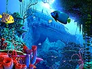 Moving Coral Reef