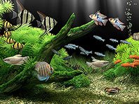 Dream Aquarium 3D screensaver screenshot. Click to enlarge