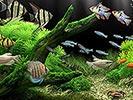 Famous Dream Aquarium
