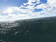 Fantastic Ocean 3D screensaver screenshot. Click to enlarge