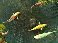 Koi Fish 3D screensaver screenshot. Click to enlarge
