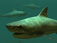 Tigerhaie 3D Bildschirmschoner Screenshot. Klicken zum Vergrößern.